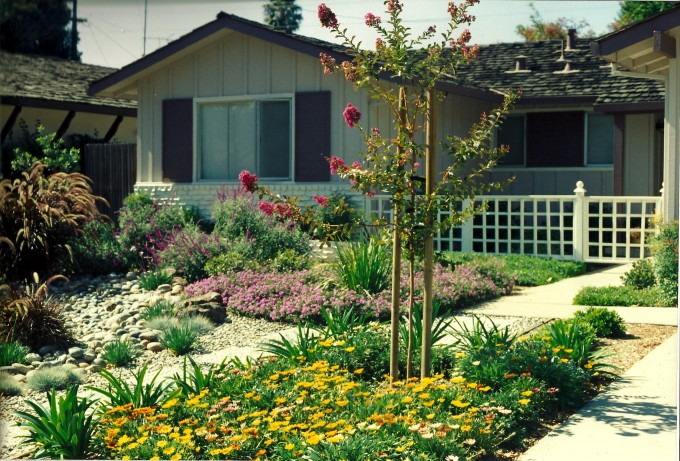 Albuquerque Xeriscape Rebate:  How you can turn your lawn into water credit dollars.