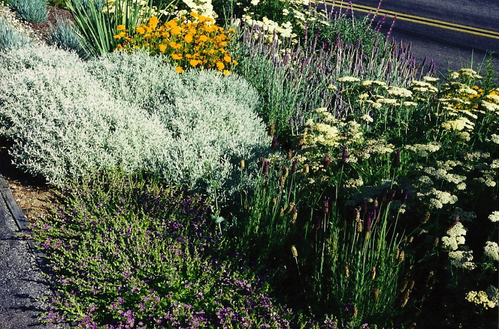 reduce water use in your garden